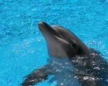 Learn More: 10 Facts About Dolphins