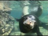 Swimming with Sea Lions in Baja