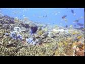 Diving Office reef, Tofo beach Inhambane, Mozambique, 03May2014