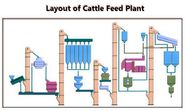 Summing Up the Advantages of Different Cattle Feeds Produced in Manufacturing Plants