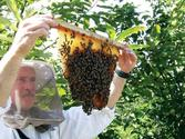 Explain in brief any one type of bee-keeping method