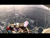 Record Blue Marlin catch - Richardsbay South Africa !!