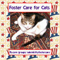 Salem Kitty Foster Care
