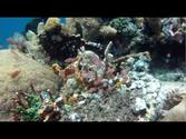 Diving in Alor (Pantar) 2011 - Indonesia