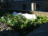 Creating Your Own Rooftop Garden