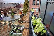 How to plant an urban vegetable garden - Boston.com