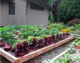 How to Build an Edible Rooftop Garden - Garden Therapy
