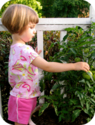 The Farmer's Garden - Buy, sell or trade your excess backyard produce, gardening tools or garden space. Free registra...