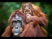 Camp Leakey Tanjung Puting National Park!!! Orangutan Borneo 2012