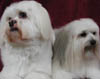 Dog Grooming by those very fussy dog people! Dog Wash Services in Adelaide and South Australia