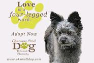 Okanagan Small Dog Rescue Society