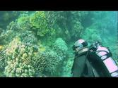 SCUBA Adventure with Lahaina Divers- Maui, Hawaii