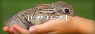 Headline for Must-have materials for rabbit care