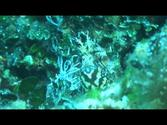 Korcula, Croatia - diving HD