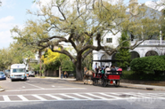 Charleston Vacation Deals on iTrip.net