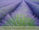 Oregon Lavender Destinations - lavender farms, nurseries and a lavender festival in Oregon