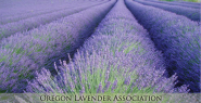 Oregon Lavender Association OLA - supporting Lavender & Lavender based businesses in the Pacific Northwest.