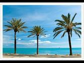 The beautiful beach of Málaga, Spain