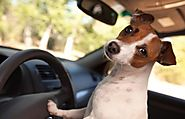 Best Dog Car Harnesses Reviews 2015 Powered by RebelMouse