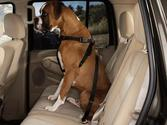 Best Dog Car Harnesses Reviews (with image) · app127