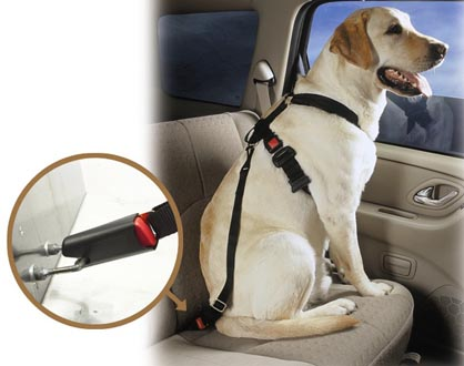 Headline for Best Dog Car Harnesses Reviews