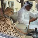 35 Things you will only see in Dubai