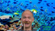 #Movember 19, Great Barrier Reef