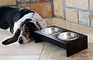 Best Raised Dog Bowls Reviews 2015 Powered by RebelMouse