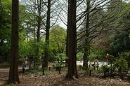 Kobe Municipal Arboretum - Wikipedia, the free encyclopedia