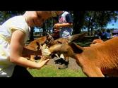 Oakvale Farm & Fauna World - Port Stephens, NSW, Australia