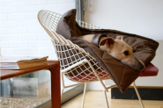 Dogs and Interior Design » Piper Hertneck