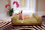 Sweet Suite of Furniture for Pampered Pets