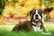 Top 10 Things to Know About Pet Cancer | Petplan Blog