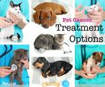 Pet Cancer & Options for Treatment