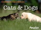 Common Cancers in Cats & Dogs - Petplan Blog