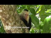 COSTA RICA manuel antonio national park (sd-video)