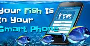 Your Fish is in Your Smart Phone - Bubblews