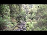 Rakiura Track - Stewart Island New Zealand - Day 2