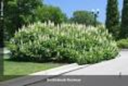 Ohioline: Yard and Garden: Trees, Shrubs & Groundcovers