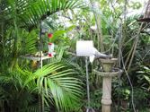 Ornithos Atlantic Rainforest Webcam | World Land Trust