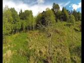 Fpv in Florø, Norway. Deer on Nybømarka