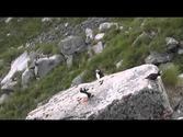 Puffin Lundefugl Runde Norway