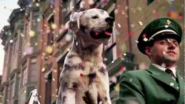 Budweiser Dog Commercial