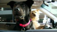 Subaru Dog Tested. Dog Approved. commercial spot. Airport pick up