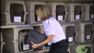 "Pet Travel on Pet Airways - ""How it Works"""