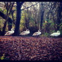 Audioboo / #AudioMo - Day 17 - Shipley Country Park