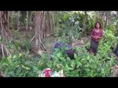 MOVING PLANET where people has NO CARBON FOOTPRINT - UTUPUA, Solomon Island
