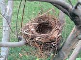 Empty Nest: the final stage? - After the Kids Leave