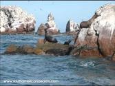 Ballestas Islands Paracas; Peru.wmv