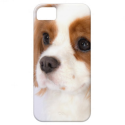 Sweet Cavalier King Charles Spaniel iphone 5g Case iPhone 5 Cover from Zazzle.com